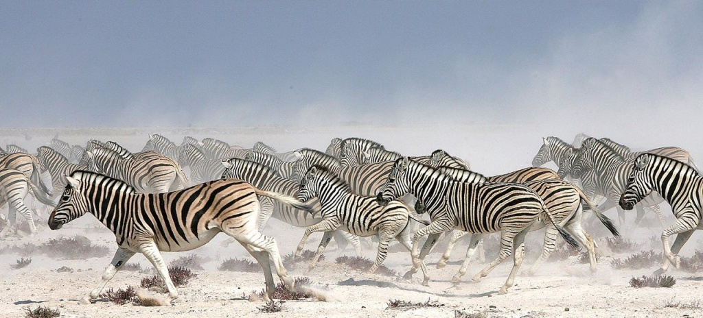 etosha_national_park_destination.jpg